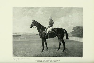 Picture of 1899 Grand National Winner Manifesto