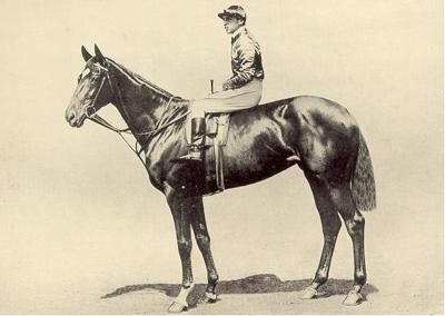 Racehorse Pretty Poly