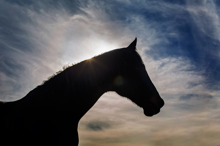 Silhouette of a Horse at Dawn