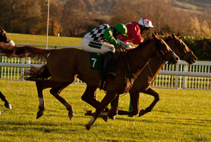 Horses Racing to Finish at Cheltenham