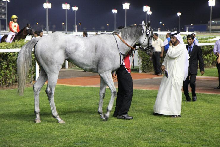 Racehorse at Meydan Racecourse in Dubai