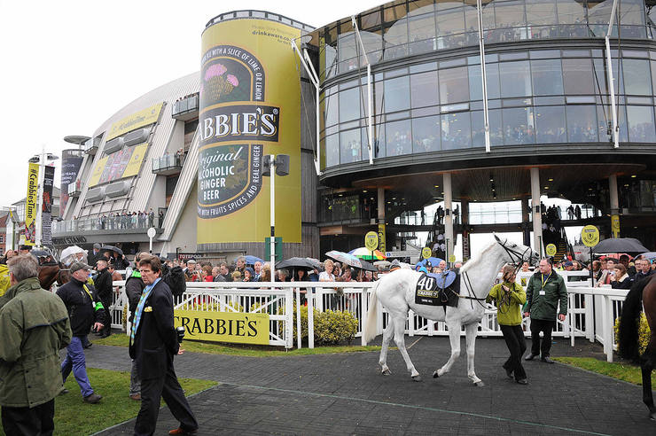 Horse in the Parade Ring at Aintree on Grand National Day