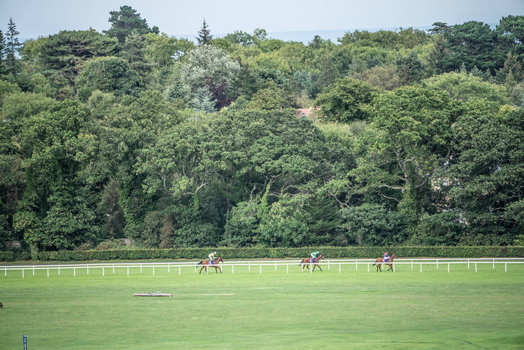 Horse on Track at Leopardstown Racecourse