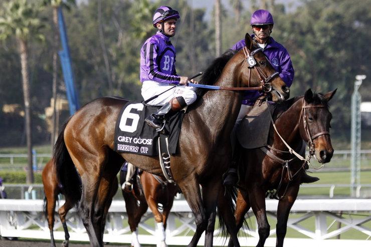 Racehorses at the Breeders' Cup at Santa Anita Racecourse