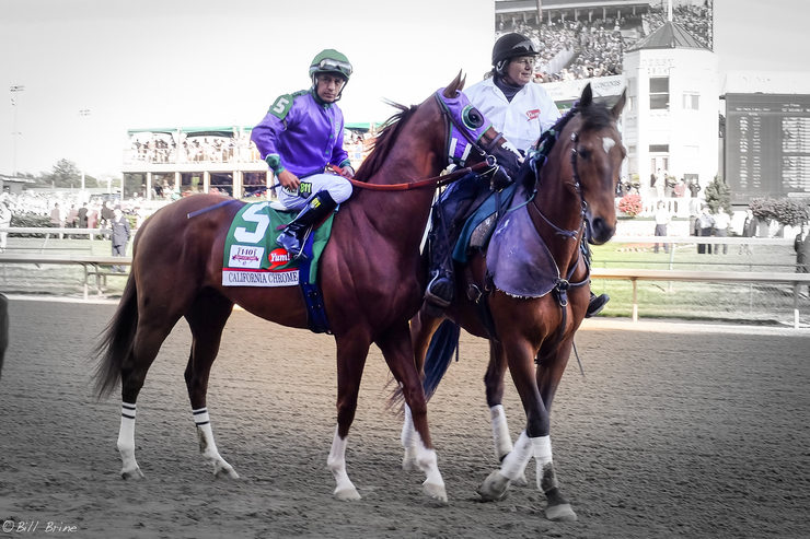 California Chrome at the 2014 Kentucky erby