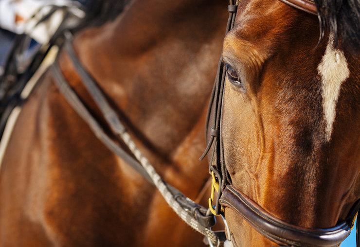 Chestnut Racehorse and Jockey