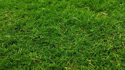Damp Grass
