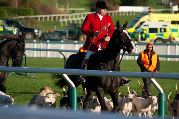Foxhunter and Hounds at Cheltenham Racecourse