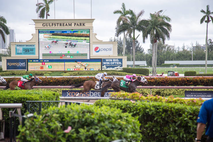 Horse Race at Gulfstream Park, Forida, USA