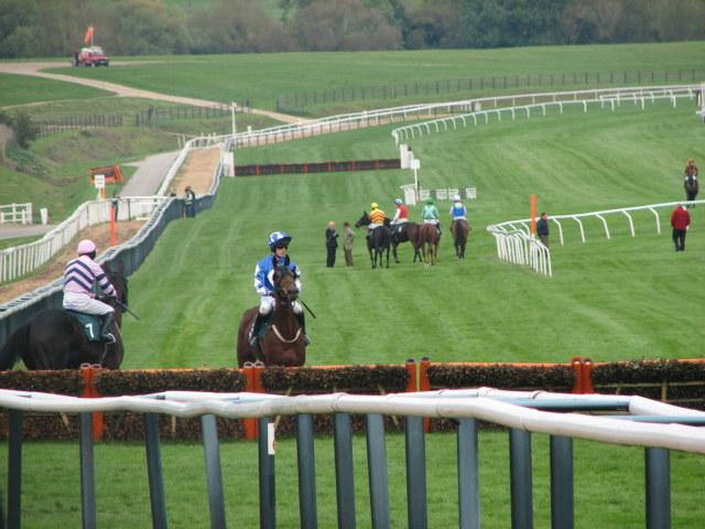 Horses Waiting at the Start of Cheltenham Hurdle Race