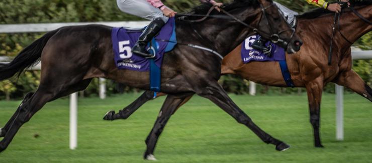 Horses Racing at Leopardstown Racecourse