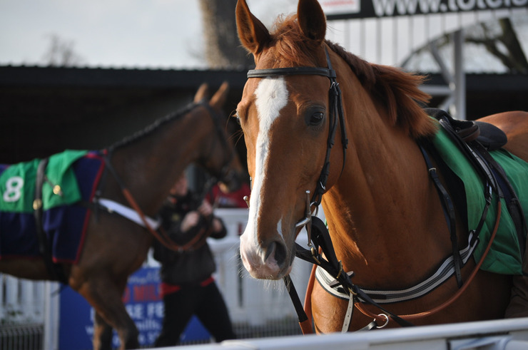 Horses Parading at Uttoxeter Racecourse