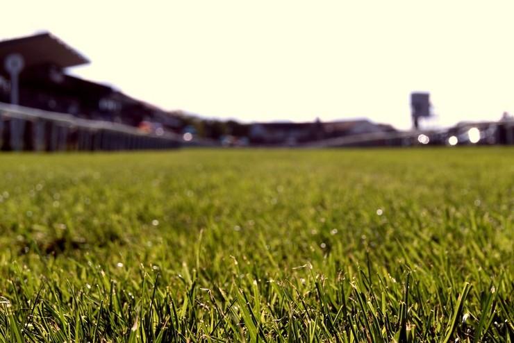 Beverley Racecourse Turf