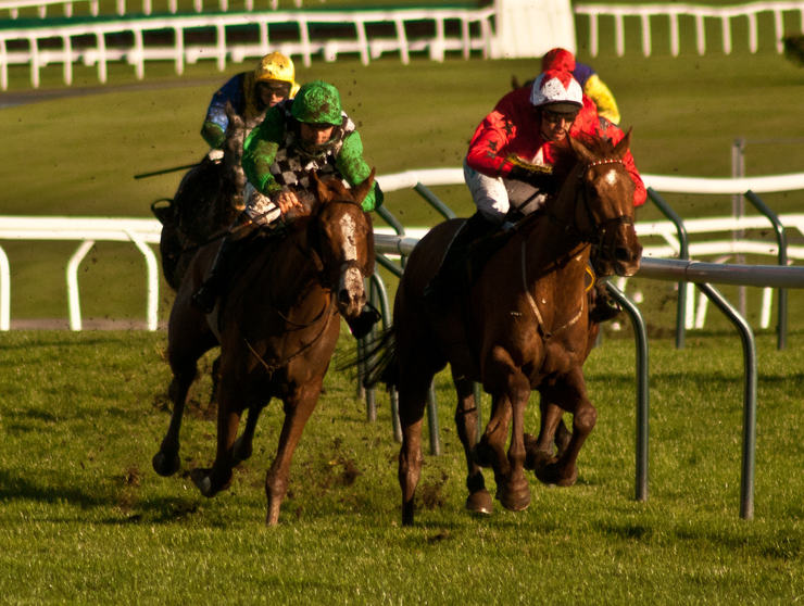 Horse Racing Around a Bend at Cheltenham Racecourse