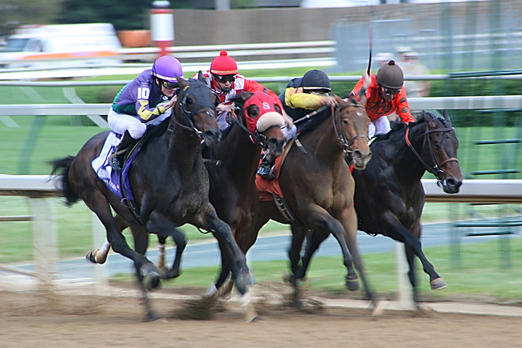 Four Horses Racing Neck and Neck