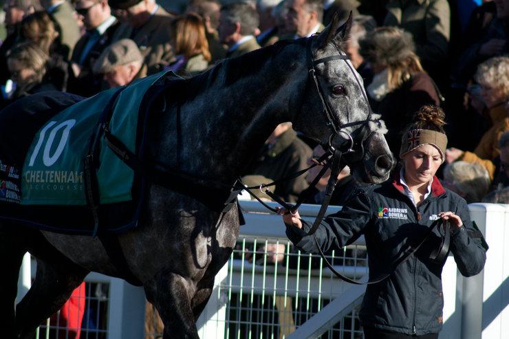 Grey Horse Parading at Cheltenham Racecourse