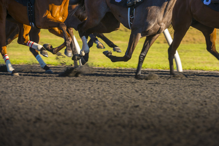 Hooves of Four Horses Racing on Sand