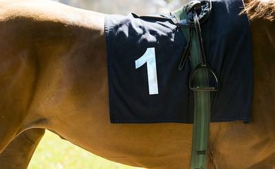 Horse Number 1 Dark Cloth