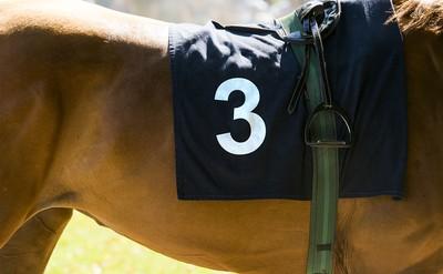 Horse Number 3 Dark Cloth