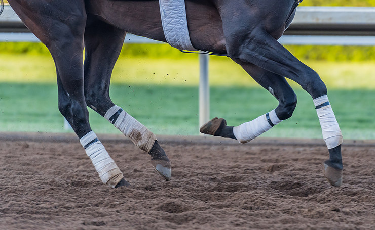 Horse Working Out on Dirt Track