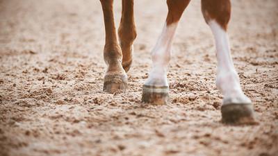 Horse's Hooves on Sand