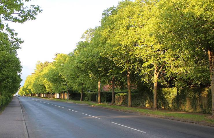 Bury Road in Newmarket