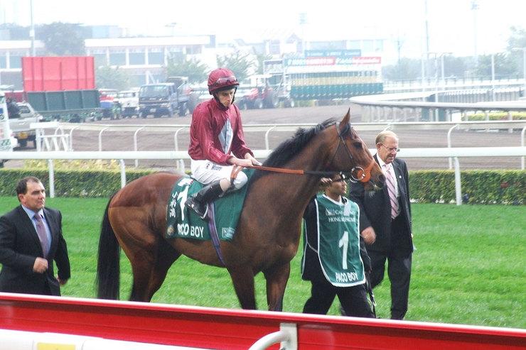 2008 Lennox Stakes Winner Paco Boy