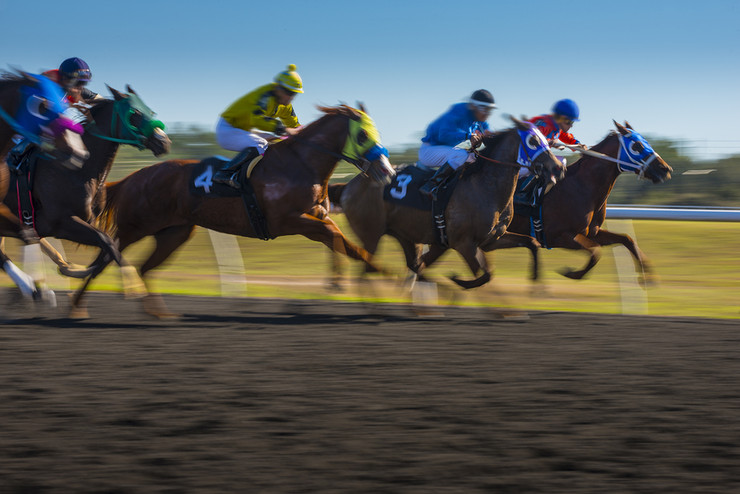 Racehorses with Visors