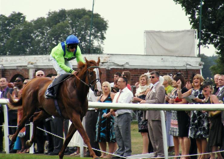 Thirsk Runner in Race