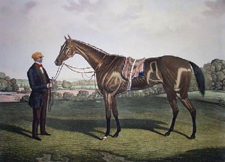 Blink Bonny, horse