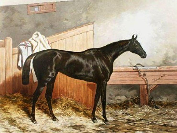Formosa, horse