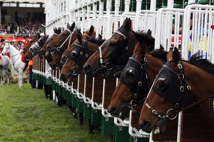 Horse racing start gate