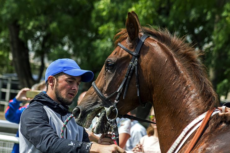 Horse trainer cooling down horse
