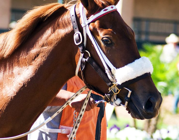 Race horse winner