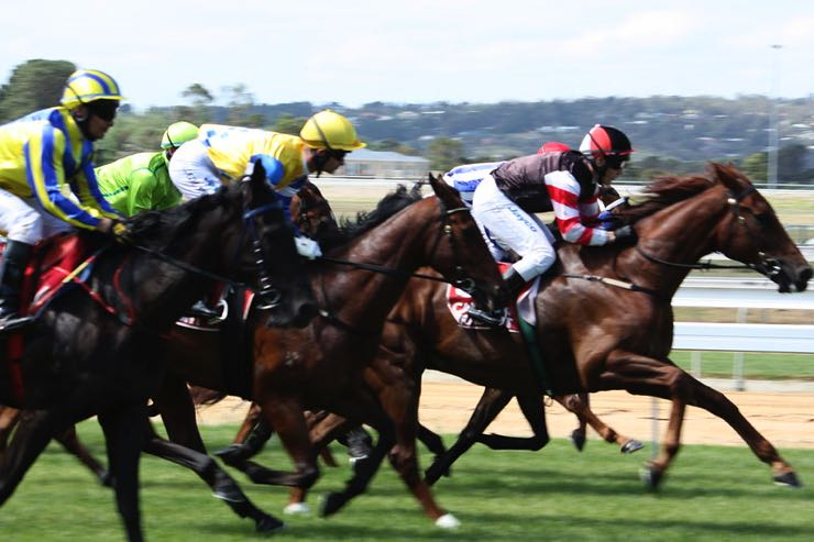 Horses racing to the finish