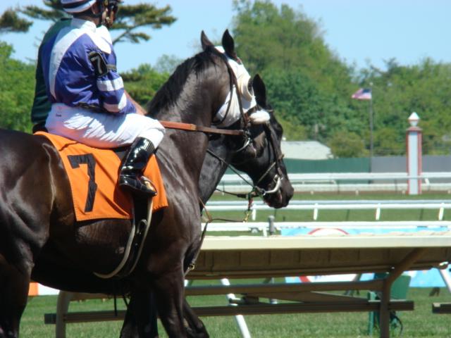 Maiden horse
