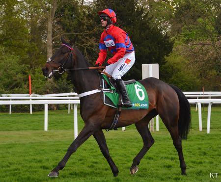 Solo jockey & horse
