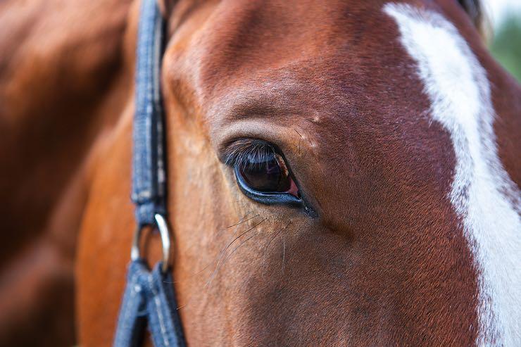 Up close race horse